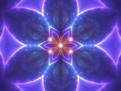 violet_flower_of_innocent_wonder